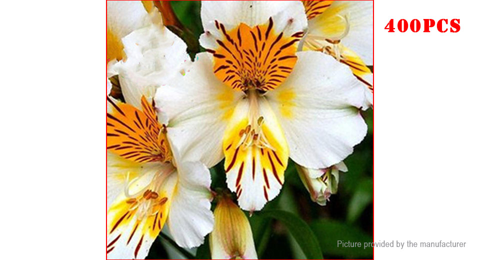 Lily Seeds Peruvian Lily Alstroemeria Bonsai Plant Mix Color Lily Seeds (400-Pack)