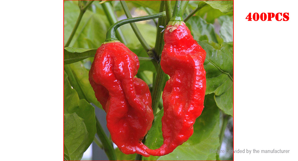 Indian Ghost Pepper Seeds Chili Vegetable Rare Red Carolina Pepper (400-Pack)