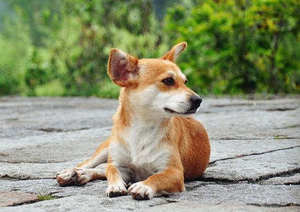 小狗吃多了撐死前癥狀 - 發條視頻