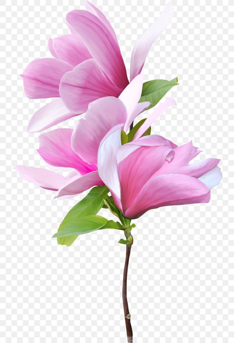 Magnolia Flower Clip Art : magnolia, flower, Southern, Magnolia, Flower, 738x1200px,, Magnolia,, Blossom,, Computer, Software,, Flowers,, Floral, Design