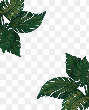 Leaf Frame Png : frame, Frame, Images,, Transparent, Download