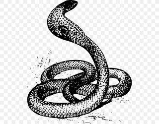 Snake Drawing King Cobra Clip Art PNG 540x640px Snake Black And White Boa Constrictor Boas Cobra