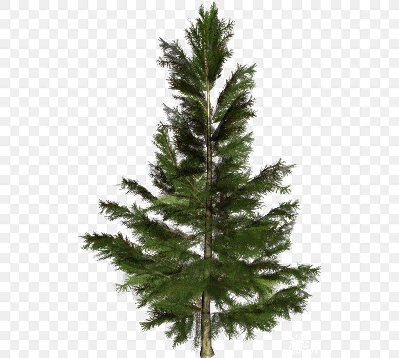 Pine tree silhouette pine tree transparent png & Spruce Pine Fir Spruce Pine Fir Conifers Tree Png 500x736px Spruce American Larch Balsam Fir Branch