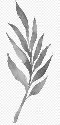 Twig Plant Stem Leaf White Black PNG 650x1697px Twig Black Black And White Branch Leaf Download