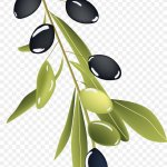 Olive Branch Drawing Png 1141x2059px Olive Branch Art Branch Drawing Food Download Free