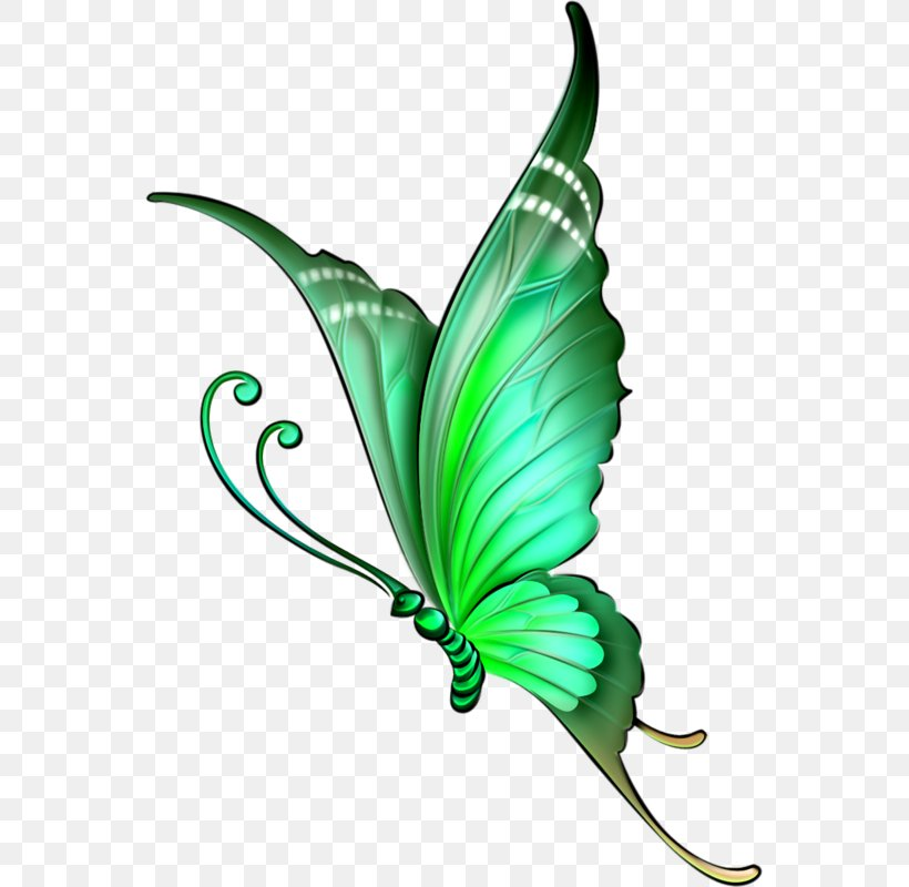Drawing Butterfly How To Draw Color Pencil Png 558x800px Drawing Botany Butterfly Color Colored Pencil Download