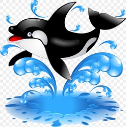 Baby Orca Killer Whale Dolphin Clip Art PNG 2989x3021px Watercolor Cartoon Flower Frame Heart Download Free