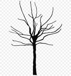 Tree Oak Black And White Clip Art PNG 640x881px Tree Black And White Branch Coloring Book