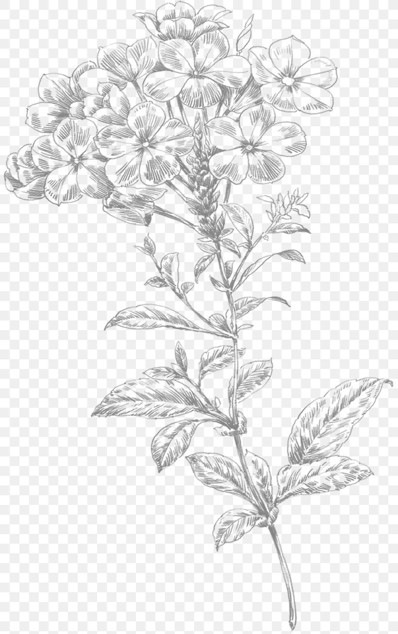 Flower PNG & Download Transparent Flower PNG Images for