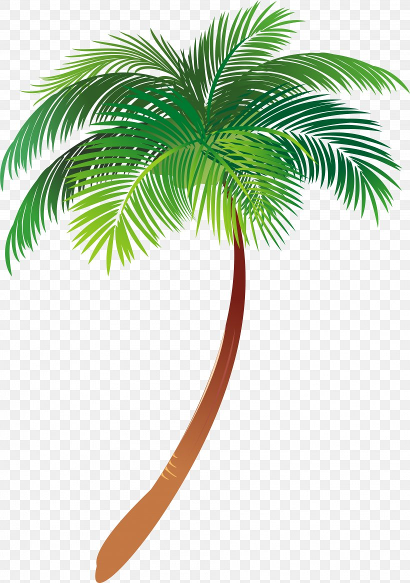 Palm Tree Vector Art : vector, Asian, Palmyra, Illustration, Trees, Vector, Graphics, Text,, 3831x5451px,, Palm,, Arecales,, Borassus,