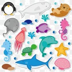 Beluga Whale Images Beluga Whale Transparent PNG Free download