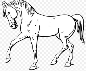 Mustang American Quarter Horse White Black Clip Art PNG 800x685px Mustang American Quarter Horse Animal Figure