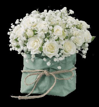 Faxiflora  Catalogo Fiori a domicilio
