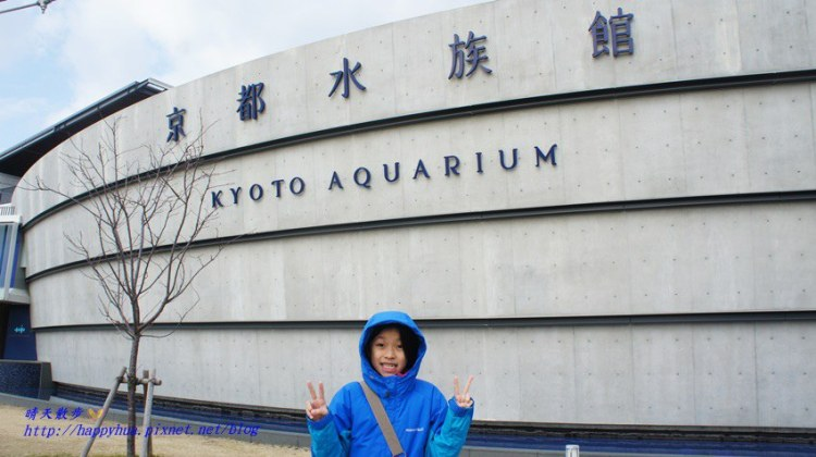 京都景點︱京都水族館Kyoto Aquarium~京都親子必遊景點 暢遊有海豚、水母、企鵝的海底世界 梅小路公園京都鐵道博物館旁