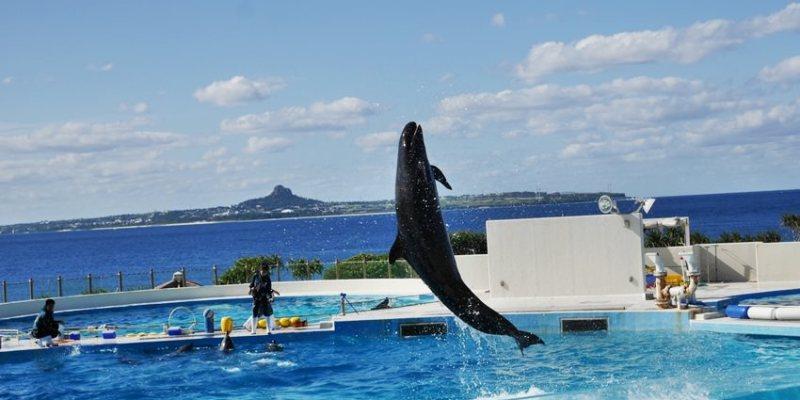 沖繩親子遊 不自駕也能玩遍海洋博公園~搭YANBARU/山原急行巴士到沖繩水族館、今歸仁城