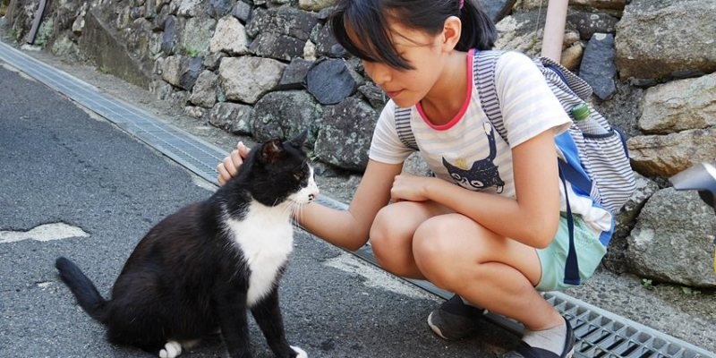 瀨戶內海親子遊|男木島~來去貓島尋覓貓咪的蹤跡