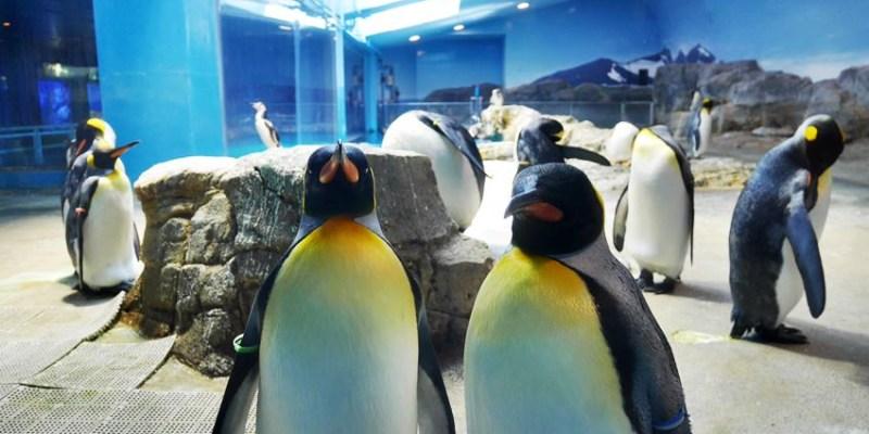 長崎景點  長崎企鵝水族館~長崎親子遊好地方 門票平價 可預約餵企鵝體驗