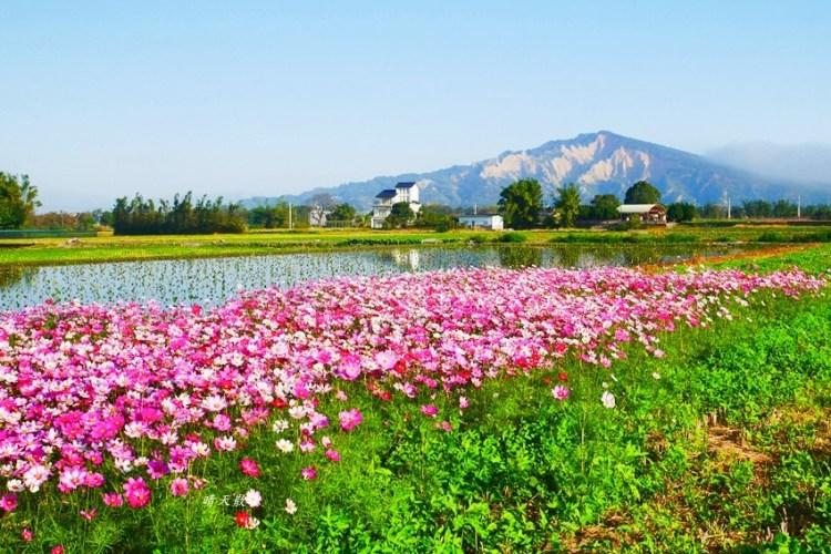 台中景點|后里安眉路邊美景~波斯菊映襯下的火炎山 彷彿迷你版日本富士山