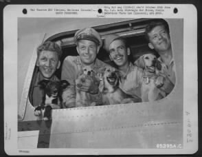 WWII Dogs