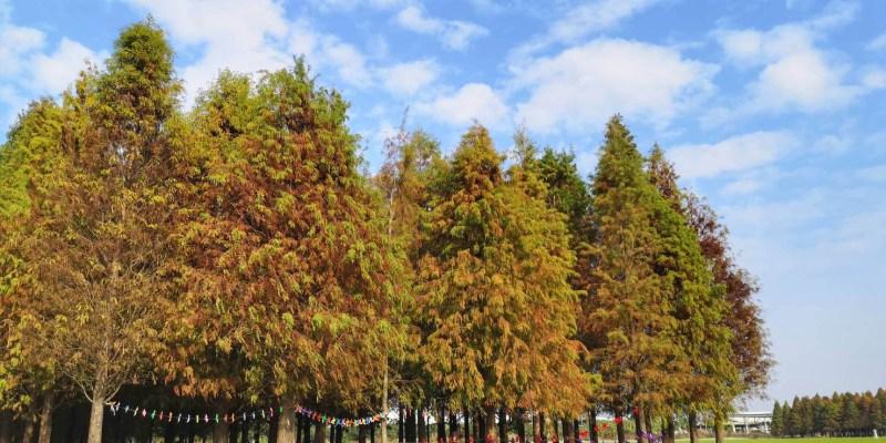台南六甲景點》六甲落羽松漸漸紅了,今年還多了裝置藝術更好拍~期待2020落羽松季