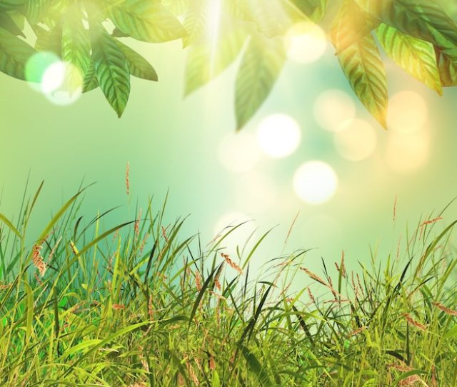 3d Leaves And Grass Background