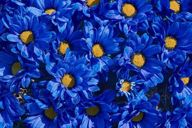 flower photos 216 000
