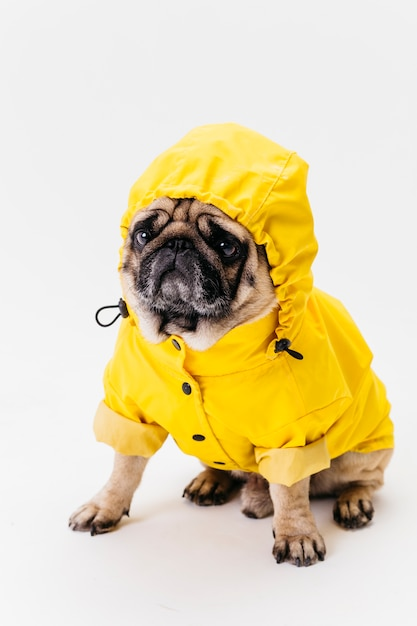 Just so you know, buzzfeed may collect a share of sales from the links on this page. Dog Clothes Images Free Vectors Stock Photos Psd