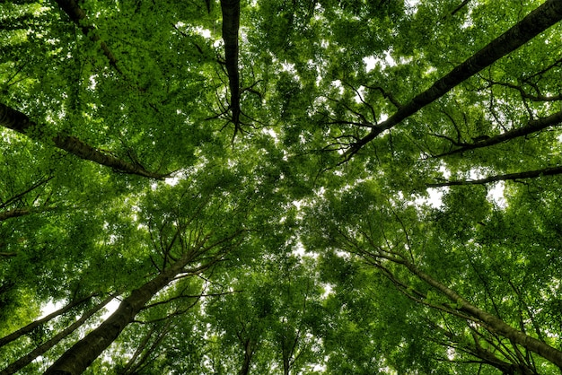 The area's climate and geography nurture forests of ancient, massive trees, some up to 1,000 years old. Free Photo High Angle Shot Of A Forest Full Of Different Kinds Of Trees And Other Plants