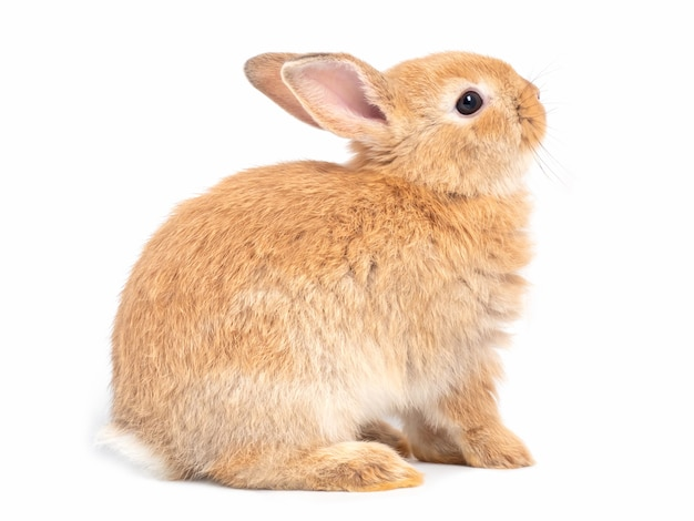 rabbit vectors photos and