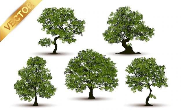 tree vectors photos and