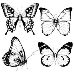 Free Butterfly Outline Vectors 300+ Images in AI EPS format