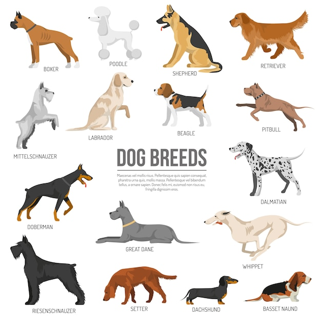 dog diagram outline large 3 speed ceiling fan pull chain switch wiring vectors photos and psd files free download dogs breed set