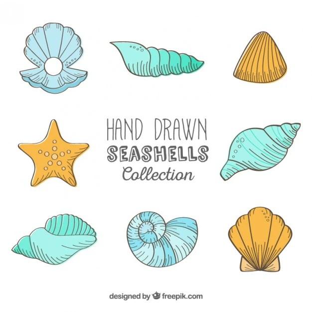seashells vectors photos and