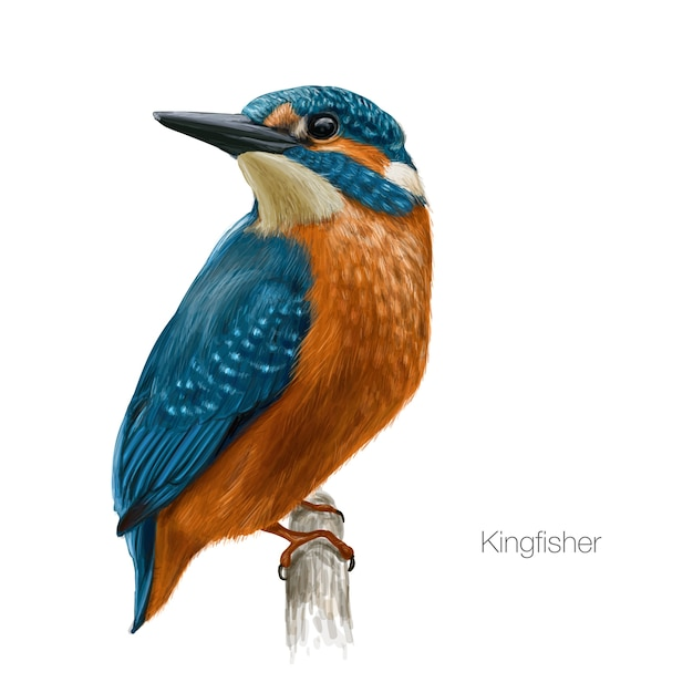 Premium Vector Kingfisher Bird Illustration