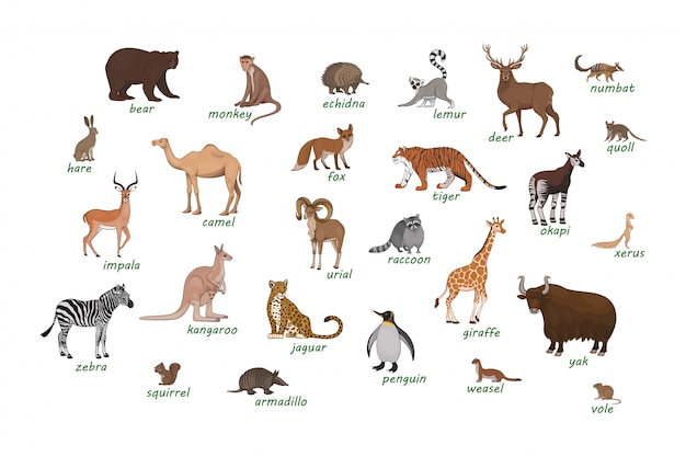 Animal Images Free Vectors Stock Photos Psd