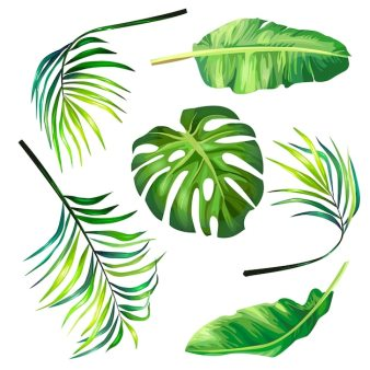 palm leaf vectors photos and psd files free
