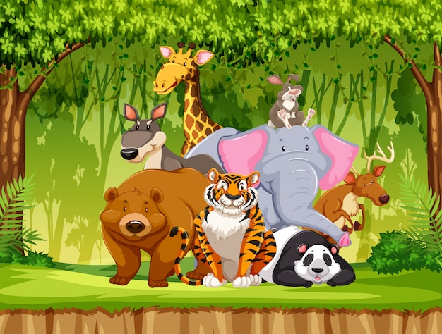 cartoon animals vectors photos