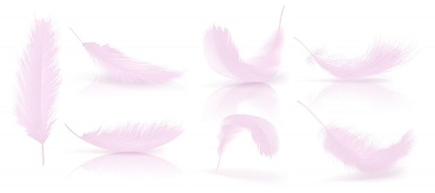 feather vectors photos and
