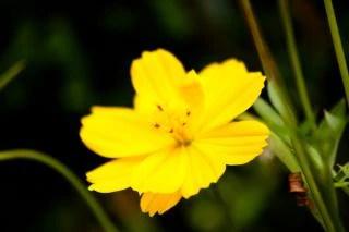 Fleurs Sauvages Vecteurs Et Photos Gratuites