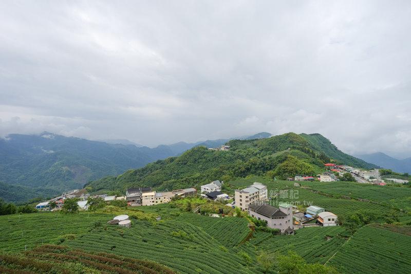 林園製茶-11