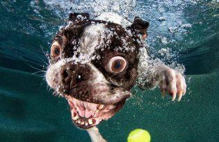 [攝影藝術]狗狗跳水的瞬間