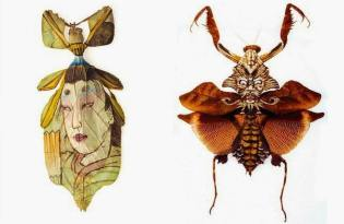 [視覺傳達]昆蟲標本彩繪藝術