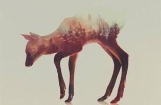 [視覺傳達]森林系攝影合成藝術