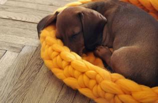 [產品設計]烏克蘭出品「Ohhio針織寵物墊」