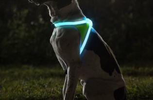 [產品設計]毛小孩LED燈帶