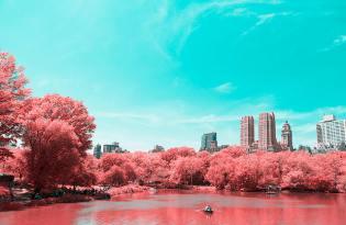 [攝影藝術]義大利出品「紐約中央公園櫻花季」