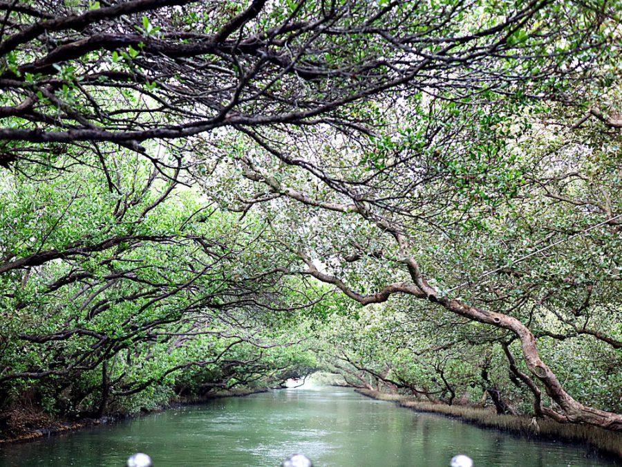 大台南必訪景點系列-安平區 四草綠色隧道:擁有台灣小亞馬遜河之稱的綠色隧道,必搭!竹筏遊四草濕地生態