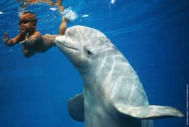 Four year old Chinese Boy Swims With Beluga Whale