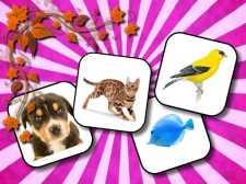 Animals Memory