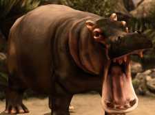 Hippo Avcılık Sniper Shooter